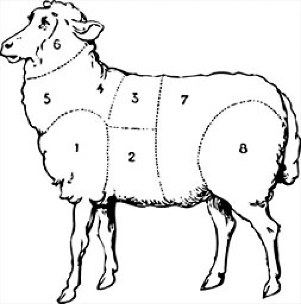 Section eight shows the top round of the lamb.
