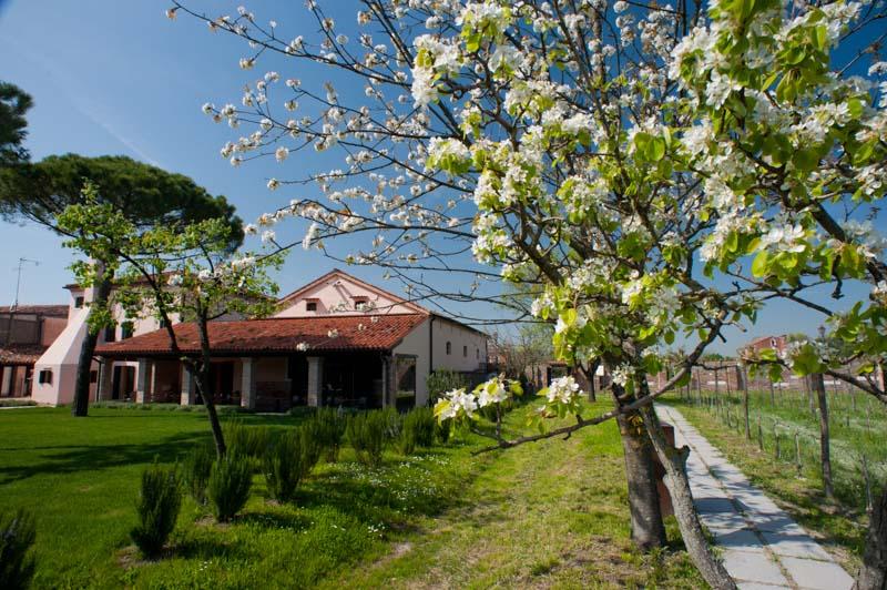Locanda Venissa, Mazzorbo. Photo: Paolo Spigariol