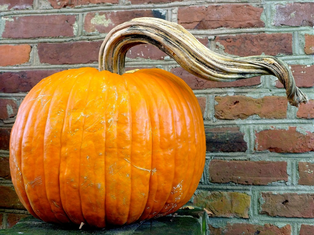 Pumpkin on a stool outside a shop in Charleston, N.C. | Photo: ©Nathan Hoyt