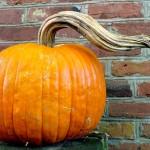 Pumpkin Masquerades for a Halloween Sweet