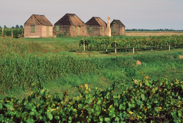 Cane and reed huts, Po River.