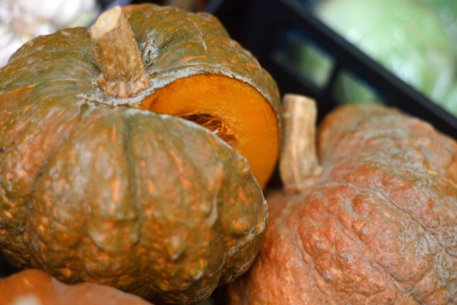 Chioggia pumpkins, considered the best for their sweet, compare and juice flesh, Bardolino.