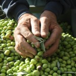 Ushering in the New Year's Italian Olive Oils